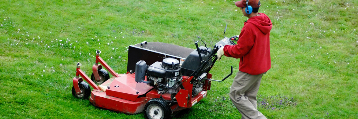 What to Ask before Hiring a Lawn Care Provider - A Great ...